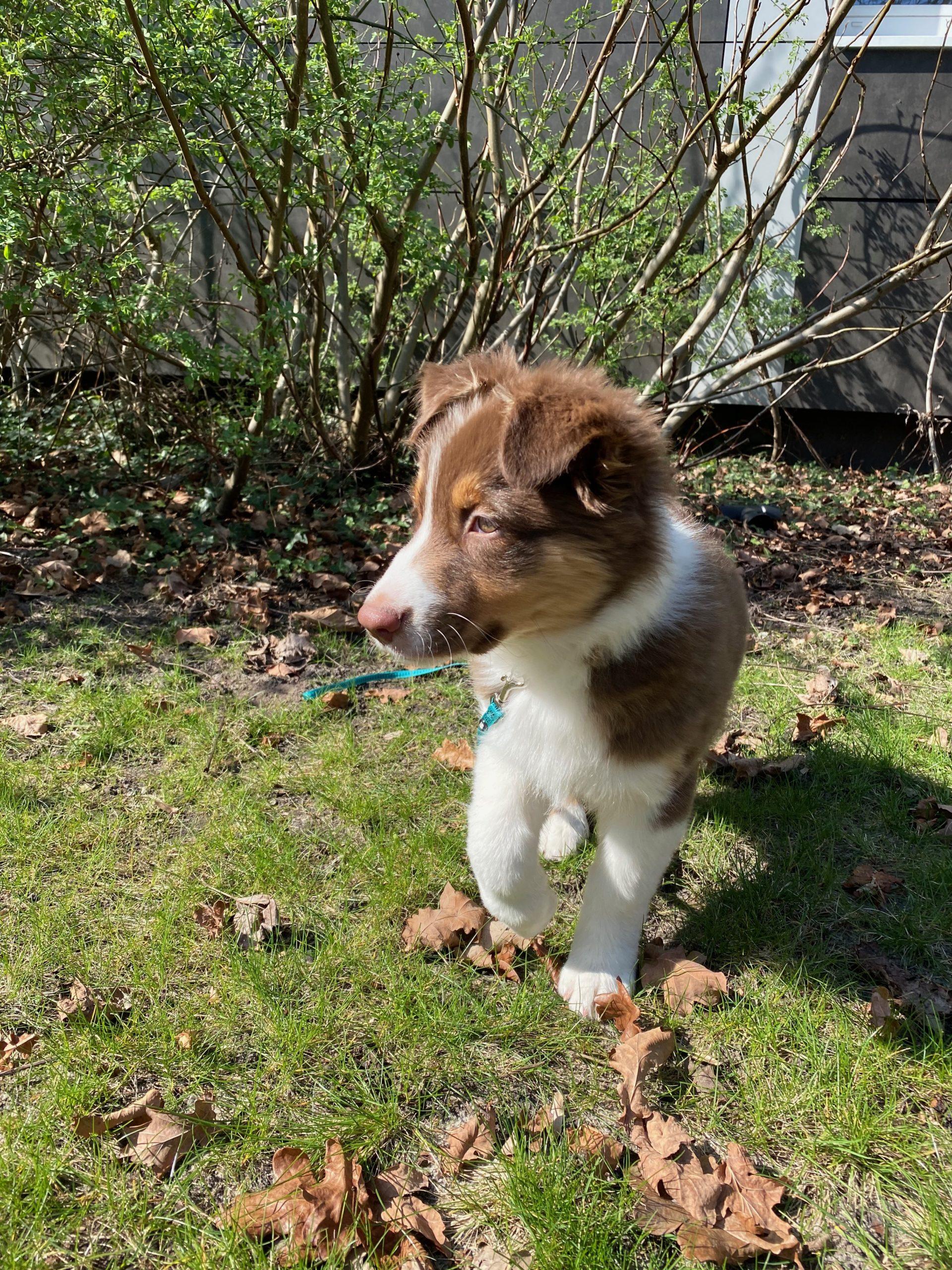 Ein Hund trotz Tierhaarallergie?